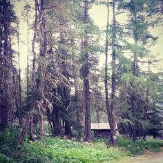 Wald am Albulapass #albula #graubünden
