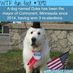 GUYS I FACT CHECKED THIS ITS TRUE LETS ALL RUN AWAY TOGETHER TO THIS TINY MINNESOTA TOWN