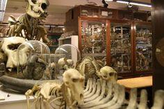 Grant Museum of Zoology (více než 20 000 zvířecích koster)    Zajímavé informace o muzeích v Londýně najdete zde: http://info.radynacestu.cz/muzea-v-londyne/