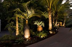 Tropical garden Lighting - Landscaping Sarasota Florida with Tropical Palm Trees Palm Trees Landscaping, Florida Landscaping, Florida Gardening, Tropical Landscaping, Outdoor Landscaping, Tropical Gardens, Landscaping Ideas, Tropical Plants, Landscaping Software