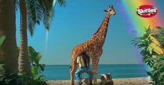 Giraffe, Animals, Animales, Felt Giraffe, Animaux, Animal, Animais, Giraffes