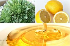 Plants for a natural cure for hemorrhoids!