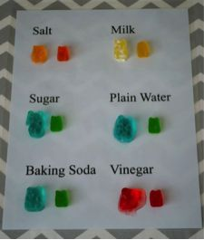 gummy-bear-osmosis-science-fair-project-4th-grade-5th-grade