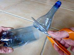 Des semis de tomates plus résistants avec la technique de la bouteille - PotagerDurable.com