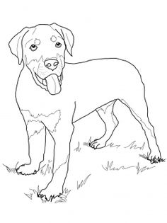 Printable Golden Retriever Coloring Page Free PDF Download At