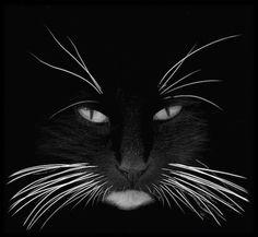 Humour - La nuit tous les chats sont gris sauf moi...