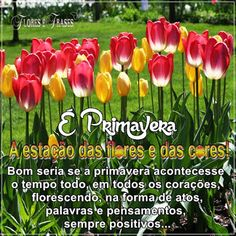 Flores e frases: É PRIMAVERA...