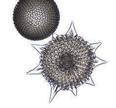 R-Heliodiscus.Picture of Radiolarian, Microscopic Nature,structures, protozoa, protozoan closeup plant life , Radiolaria microscope, Mikroskop