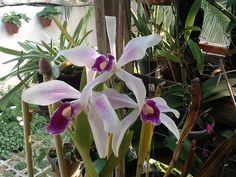 Minhas orquídeas 2014