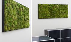 moss wall by art aqua, moss, green, natural, vertical green, design, minimalism, white, home, ofiice, biophilia, plant, plant art