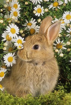 Bunny in Dasies Cute Bunny Pictures, Cute Animal Pictures, Bunny Pics, Nature Animals, Animals And Pets, Beautiful Rabbit, Cute Baby Bunnies, Pet Rabbit, Tier Fotos