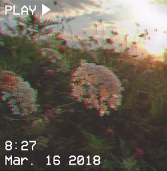 M O O N V E I N S 1 0 1 #vhs #aesthetic #green #glitch #plants #flowers