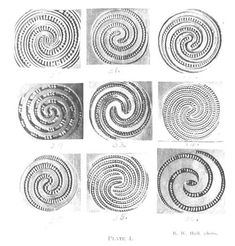Journal of the Polynesian Society: Maori Spirals, By W. Phillipps, P Wood Carving Patterns, Carving Designs, Abstract Sculpture, Wood Sculpture, Bronze Sculpture, Auckland, Art Maori, Papua Nova Guiné, Maori Symbols