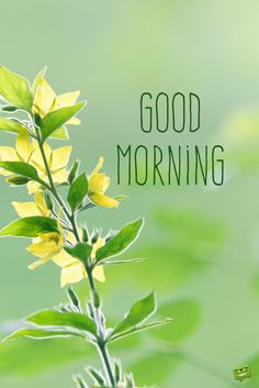 Good morning picture with beautiful flower and fresh background. Good Morning Roses, Good Morning Cards, Morning Love, Happy Morning, Good Morning Picture, Good Morning Messages, Good Morning Good Night, Morning Pictures, Good Morning Images