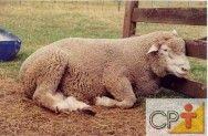 Produção de cordeiros: sintomas que podem indicar doenças