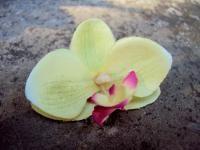 BROCHE AIGUILLE FLEURON ORCHIDEE fleurs artificielles lime cerise