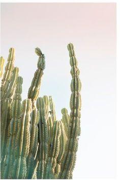 Bright Cactus Framed Print by Jane Wilder