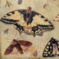 Jan van Kessel painted these intricate illustrations in the via Amazing Paintings, Dutch Artists, Flower Paintings, Beetles, Delft, Marine Life, Natural History, Figurative Art, Pet Birds