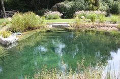 Beautiful, healthy, and blue water can be achieved with Organic Pond dyes and products! www.organicpond.com