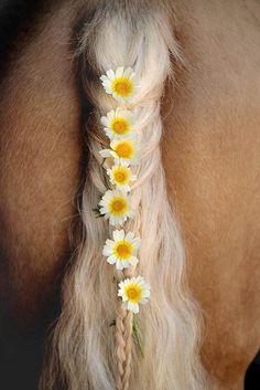 Lovely palomino with flowers braided into their tail. #braids #horse #flowers #palomino