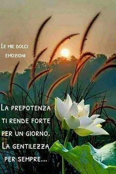 lotus in bloom Exotic Flowers, Amazing Flowers, White Flowers, Beautiful Flowers, Flor Magnolia, Beautiful Sunset, Nature Pictures, Amazing Nature, Mother Nature