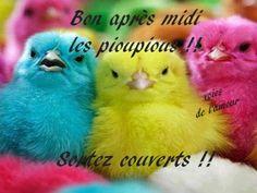 Bon après-midi les pioupious !! Sortez couverts !! #bonapresmidi oiseau…