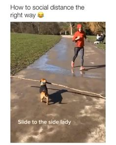 Funny Animal Jokes, Funny Dog Memes, Funny Dog Videos, Crazy Funny Memes, Really Funny Memes, Funny Animal Pictures, Haha Funny, Humor Videos, Animal Humor