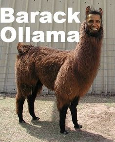 Vitamin-Ha – It's a Llama Dude!
