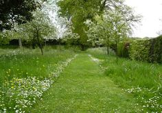Wilde tuin
