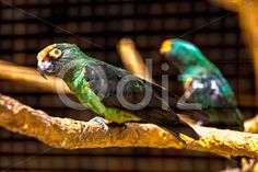 Qdiz Stock Photos | Blue and green parrot,  #animal #beak #bird #blue #bright #color #colorful #exotic #feather #green #life #nature #parrot #perch #pet #tropical #wild #wildlife #wood #wooden #zoo