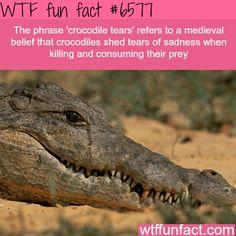 Crocodile Tears - WTF fun facts