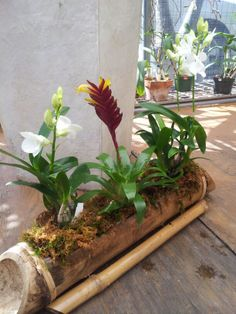 Bamboo orchid arrangements. With white dendrobrium orchis and air plant