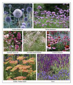 Ian Barker Gardens MIFGS Planting List. Perennial garden