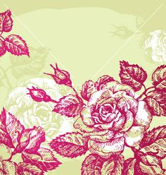 Floral background with roses vector on VectorStock®