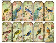 WANT. http://www.etsy.com/listing/97095792/bird-french-peacock-shabby-chic-green?ref=sr_gallery_6_search_query=peacock_view_type=gallery_ship_to=ZZ_min=0_max=0_page=13_search_type=handmade