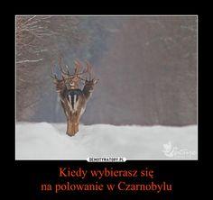 Kiedy wybierasz się na polowanie w Czarnobylu
