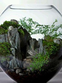 ça ressemble a une mini forêt