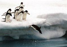 Twitter / Designzzz: Penguins♥