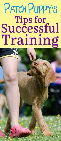 Successful training is about more than commands and treats. It's about your dog's focus and your patience. Read Patch Puppy's Tips for Successful Training! Dog Training Books, Puppy Training Tips, Training Your Puppy, Potty Training, Dog Clicker Training, Puppies Tips, Easiest Dogs To Train, Dog Health Care, Aggressive Dog