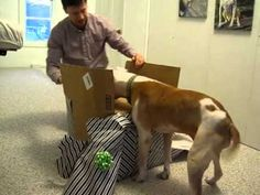 This Dog Beat Cancer. He's About to Get an Unforgettable Birthday Gift. See What's Inside!