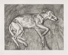 Lucien Freud's etching of his dog Eli -Detailed lines -carefully shaded -expression