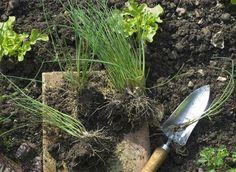 Multiplication des fleurs, légumes et arbustes
