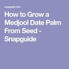 How to Grow a Medjool Date Palm From Seed - Snapguide