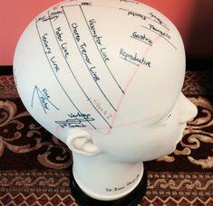 Model for scalp acupuncture. #Acupuncture #AcupunctureUses