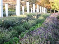 Margaret Roberts - Herbal Centre Lavandula, Child Friendly, Organic Farming, Afrikaans, Garden Tips, Oasis, South Africa, Followers, Herbalism