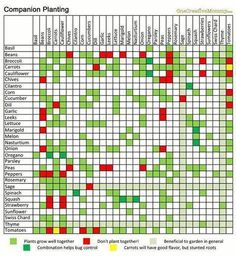 Companion Gardening Gardening for Dummies: What Plants Should I Plant Together? - fungardenz - This easy-to-read Companion Planting chart is a perfect guide for learning which plants work well together in the garden. Gardening For Dummies, Gardening Tips, Organic Gardening, Gardening Vegetables, Texas Gardening, Companion Planting Guide, Plant Guide, Vegetable Companion Planting, Front Yards