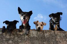 German Dog Commands, Guard Dog Breeds, Son Chat, Talking Animals, German Dogs, Most Popular Dog Breeds, Dog Park, Training Your Dog, Brain Training