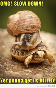 Check out all our Snail Riding Turtle funny pictures here on our site. We update our Snail Riding Turtle funny pictures daily! Funny Animal Pictures, Funny Animals, Cute Animals, Pictures Images, Wild Animals, Weird Pictures, Lazy Animals, Funniest Pictures, Bing Images