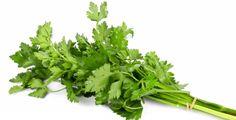 Co zmůže obyčejná petržel Korn, Parsley, Herbs, Herb, Medicinal Plants