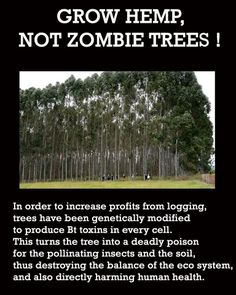 Genetically modified trees.... stop this madness! :-/